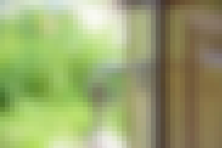 pexels-photo-101808