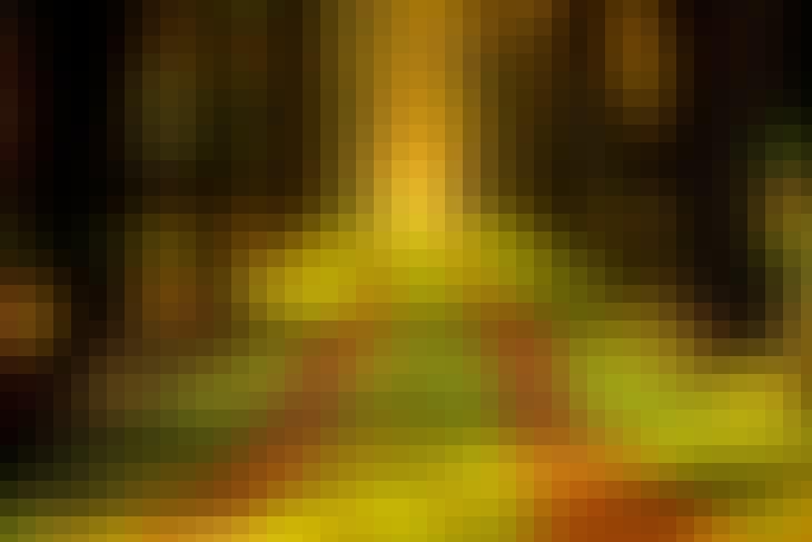 150520_Trees_